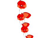 canva-poppies-string