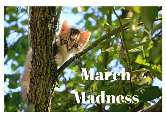 rssos march madness giveaway
