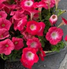 lub flowers